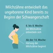 schwangerschaft_milchzaehne-quad-001